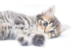 Cute little tabby kitten on white background Stock Images