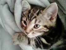 Cute little tabby kitten Stock Photos