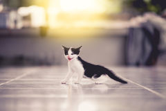Cute little tabby kittens. On blur background selective depth of field Royalty Free Stock Photo