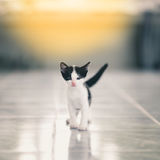 Cute little tabby kittens Royalty Free Stock Images