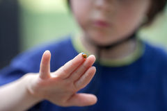 Cute little toddler boy, playing with ladybird. Outdoor in the park, summertime Royalty Free Stock Image