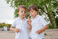 Cute little toddler boys, playing with ladybird outdoor in the p Royalty Free Stock Photo