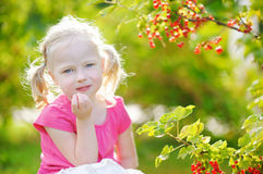 Cute little toddler girl picking red currants in a garden Stock Photos