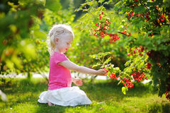 Cute little toddler girl picking red currants in a garden Royalty Free Stock Image