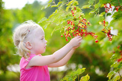 Cute little toddler girl picking red currants in a garden Stock Photography