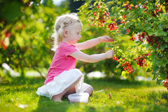 Cute little toddler girl picking red currants Royalty Free Stock Photos