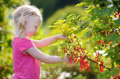 Cute little toddler girl picking red currants Stock Image