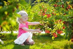 Cute little toddler girl picking red currants Royalty Free Stock Images