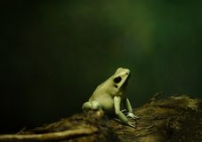 Cute little tree frog in the night royalty free stock photo
