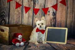 Cute Little Valentine Puppy with Red Bow Tie. And red banner including a blank chalk board for message royalty free stock images