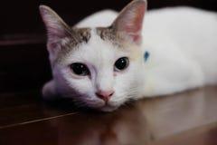 Cute little white kitten sleeps Royalty Free Stock Image