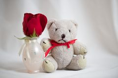Cute little white polar teddybear with a Red Rose for Holidays or Celebrations Royalty Free Stock Photos