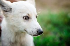 Cute little white puppy. Outdoors royalty free stock image