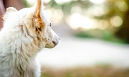 Cute little white puppy. Outdoors stock photo