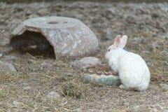 Cute little white rabbit stock photos