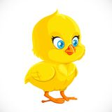 Cute little yellow cartoon chicken Stock Image