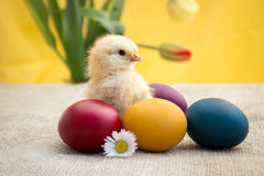 Cute little yellow chicken Stock Images