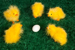 Cute little yellow Easter chicks Royalty Free Stock Photography