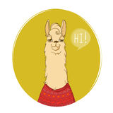 Cute llama character says Hi! to you! Framed animal portrait poster. Vector illustration Stock Photography