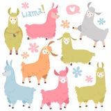 Cute llama set. Baby llamas alpaca, wild lama. Peru camel girl invitation elements cartoon vector set stock illustration