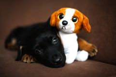 Cute lonely black puppy. Dog-pet-animals-puppy stock images