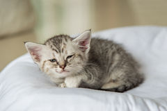 Cute lonely kitten Royalty Free Stock Image
