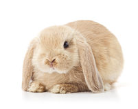 Cute long eared rabbit. Portrait of cute long eared rabbit isolated on white background Stock Photo