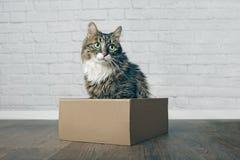 Cute longhair cat sitting in a cardboard box and looking sideways. Cute maine coon longhair cat sitting in a cardboard box and looking sideways stock photography