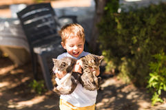 Cute lovely boy with kitten in a park stock photo