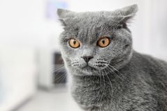 Cute lovely cat. At home royalty free stock photos