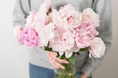Cute and lovely peony flowers in women`s hands.. many layered petals. Bunch pale pink peonies flowers light gray. Cute and lovely peony. many layered petals Stock Photos