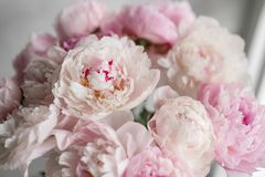 Cute and lovely peony. many layered petals. Bunch pale pink peonies flowers light gray background. Wallpaper, Vertical. Cute and lovely peony. many layered Stock Images