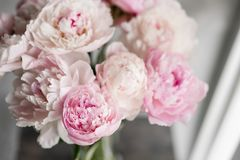 Cute and lovely peony. many layered petals. Bunch pale pink peonies flowers light gray background. Wallpaper, Vertical. Cute and lovely peony. many layered Stock Photography