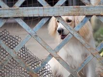 Cute lovely white long hair young crossbreed dog Stock Photos