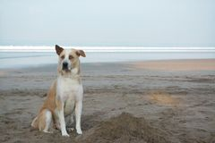 Cute loyal dog sitting on beach front. Sad looking dog waiting patiently for his owner royalty free stock photos