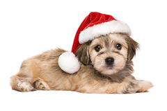 Cute lying Christmas Havanese puppy dog. Cute lying Bichon Havanese puppy dog in a Christmas hat looking at camera - Isolated on a white background Stock Photo