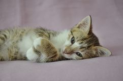 Cute lying kitty Stock Photos