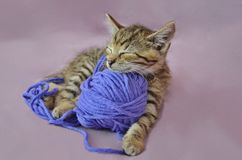 Cute lying kitty with ball of wool Royalty Free Stock Images