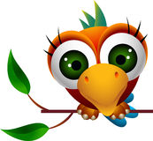 Cute macaw bird cartoon Stock Image