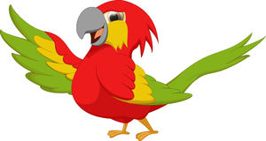 Cute macaw bird cartoon Stock Images