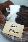 Cute male cate sleep dont disturb inscription Royalty Free Stock Photos