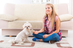 Cute Maltese dog giving a paw. Cute and fluffy young Maltese dog giving a paw Royalty Free Stock Photography