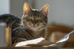 Cute marble cat in sunlight on paper, clever face, eye contact, comical funny beast. In sunlight, eye contact stock images