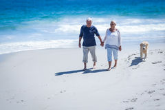 Cute mature couple holding hands walking the dog Stock Images
