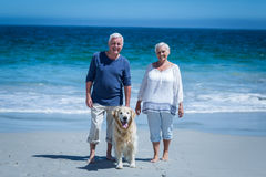 Cute mature couple holding hands walking the dog Royalty Free Stock Photos