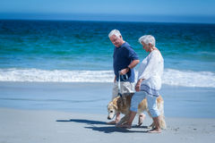 Cute mature couple holding hands walking the dog Stock Image