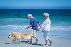 Cute mature couple holding hands walking the dog Royalty Free Stock Photo