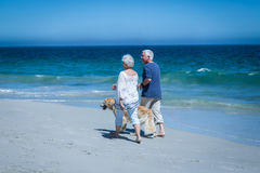 Cute mature couple holding hands walking the dog Stock Photography