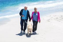 Cute mature couple walking their dog Stock Images
