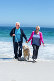 Cute mature couple walking their dog Royalty Free Stock Images